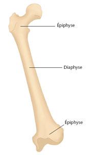 coupe d'un os