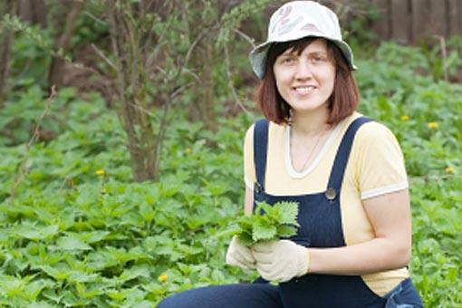 Peut-on cultiver et récolter ses propres plantes ?
