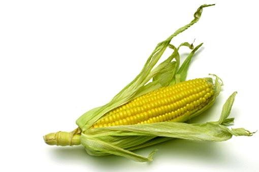 Que penser des OGM?