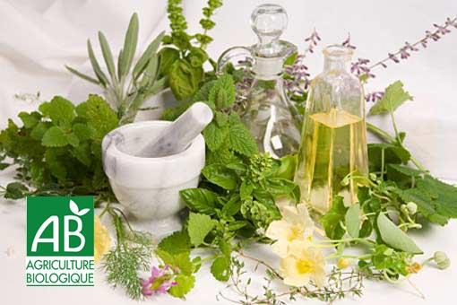 Faut-il choisir des produits à base de plantes bio ?