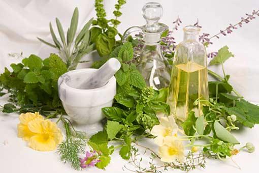 Comment classer et reconnaître les plantes médicinales ?