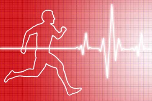 Le cœur et les vaisseaux pendant le sport