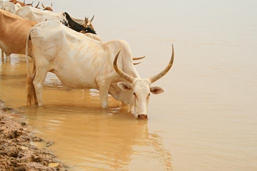 Se protéger des maladies transmises par les autres animaux