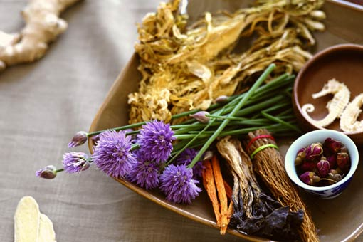 Quelles parties des plantes médicinales utilise-t-on ?